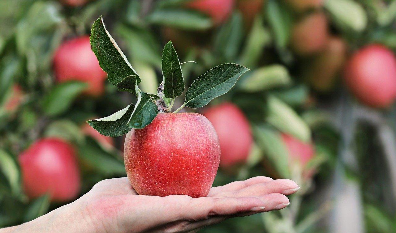 apple-2788662_1280