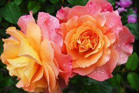 flowers-174817_640 (1)