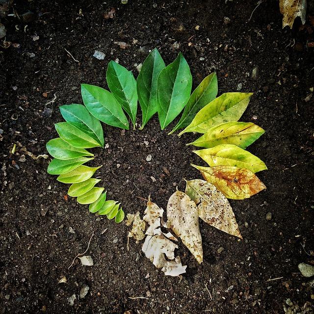 leaf-3341897_640