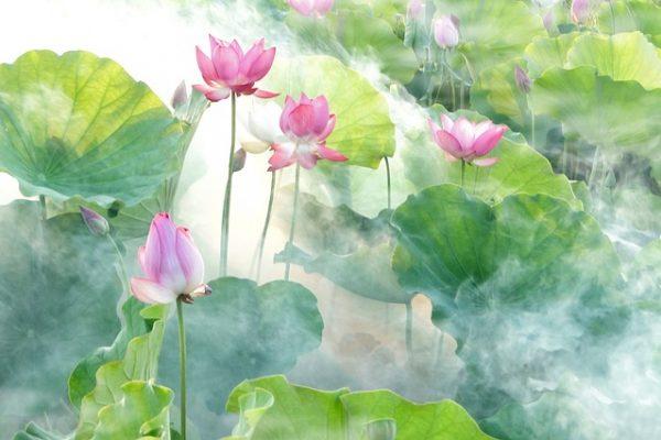 lotus-2528456_640